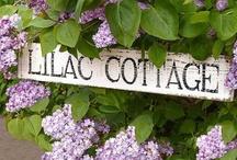 ~♡~Lilac Cottage~♡~