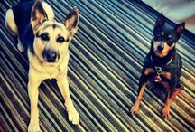 Dog-Friendly Activities / A complete list of dog-friendly activities in the Grand Haven-Spring Lake area.