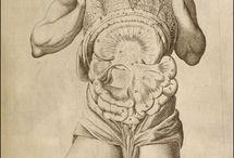 Museum anatomicum