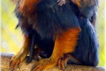 Animais - Macaco