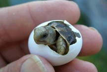 just darn cute! / by Jane Miller