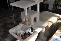 play ground para gatos