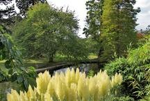 Favorite places and spaces / Jardines, plantas, espacios al aire libre