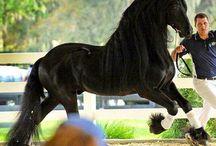 Cavalos ❤️
