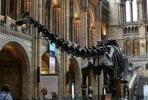 Natural history London
