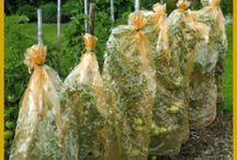 Pflanztechnik