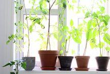 l e t  i t  g r o w / gardening, plants, flowers