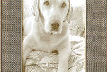 silver ornate picture frames / when you're looking for something beyond ordinary . . . silver leaf wood picture frames, made in USA