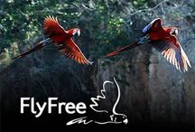 FlyFree / Stoping the trade in wild-caught birds and returning parrots to the wild.
