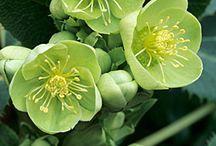 fleurs verte tendre-menthe