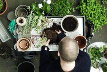Odlingstips från Granit / Tillsammans med trädgårdsmästare Andreas Graveleij har vi tagit fram ett gäng schyssta odlingstips för frön, sticklingar och plantering.