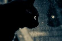 Animals I Love / by Vicki Trenholm