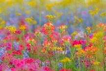 Rainbow Art / by Sue Bemiss