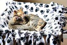til kattunger