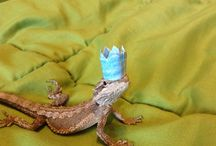 Pets in Party Hats / Exactly as the title suggests. To submit your own, tag us in your pictures, or send us them on Twitter (@RuneScape).  / by RuneScape