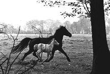 Kentucky Horses / by Becky McQuinn