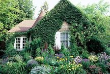 Cottage Gardens / by Amy Picon