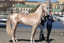 Beautiful Horses / Beautiful horses that have lucky owners
