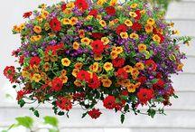Blommor och fina saker