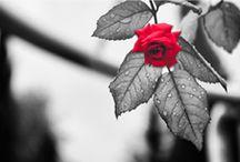 Dédier une étoile pour un être disparu, l univers du Souvenir d Etoilez-moi.com / Dédier une étoile pour immortaliser un être disparu,  avoir un lieu de recueillement partout avec vous offrez le plus beau des hommages, nommer une étoile du nom de l être cher