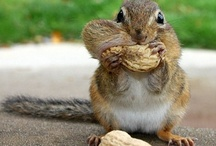 Adorable & Nutty