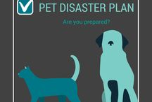 Disaster Preparedness / Learning how to prepare for a natural disaster #pets #family #business #home