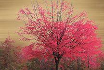Rakkaudesta puihin