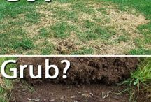 Lawn Care Education / Lawn & Turf Care - growing grass - maintaining grass lawns - #lawn_care