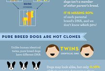 Doggie facts!