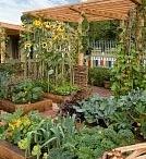 Garden Ideas / by Tammy Rousseau Allen