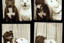 Dogs in photobooths