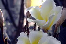 Monochrome / flower in B&W