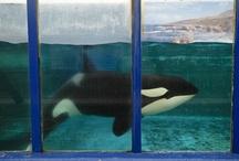 No to captivity