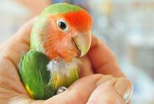 5 Cara Memaksimalkan Suara Burung dengan Pola Perawatan Sederhana