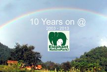 Elephant Nature Park Permanent land / 2003 with the help of Bert Von Roemer andThe Serengeti Foundation we moved the herd to our new land