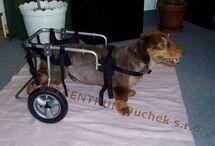 vozík pre psa