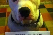 Pet Shame
