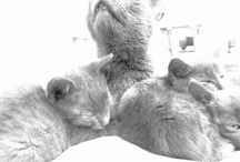 Cat &♡