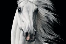 Портрет коня