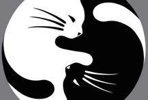 dessin chats