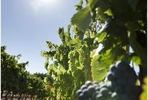 Terroir / soil & environment for wine (I could not find any Japanese wine info. like Koshu, Nagano, Hokkaido... sigh)