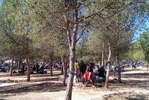 Sax (Alicante, Comunidad Valenciana) / Qué hacer, qué ver y dónde ir cuando visitas Sax con niños y en familia