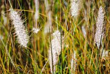 Nature / Pequeñas grandes cosas :)