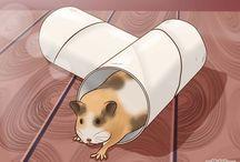 Hamster Happiness