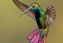 humming birds and flowers