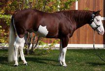My FAVOURITE stallions