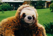 #BóktheSloth / The adventures of our furry mascot named Bók.