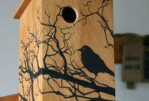 Ptáčči/ Birds