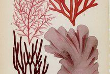 Botanica illustrations