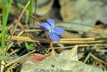 Flowers / by Merle Loman